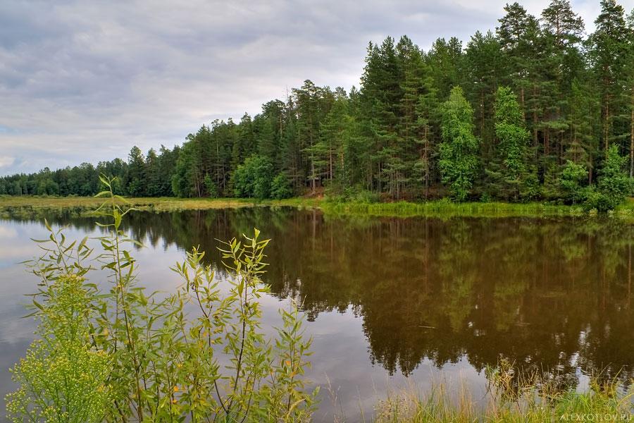 Летняя зарисовка у озера #3