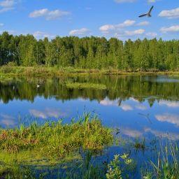 Летняя зарисовка у озера #5