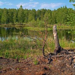 Летняя зарисовка у озера #6