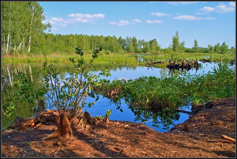 Летняя зарисовка у озера #8