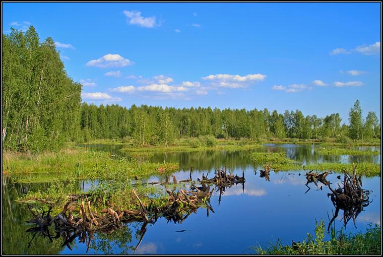 Летняя зарисовка у озера #9