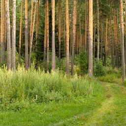 В леса