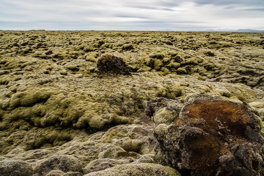 Исландия день второй. Поля лавы, покрытые мхом 9998
