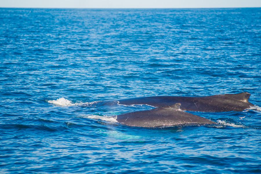 Исландия день шестой. Два кита