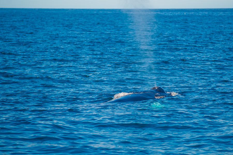 Исландия день шестой. Фонтанчик кита