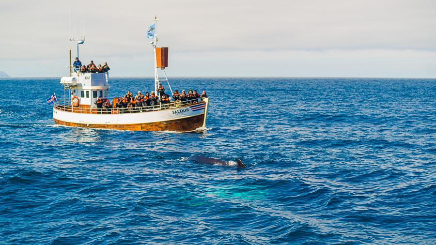 Исландия день шестой. Whale watching