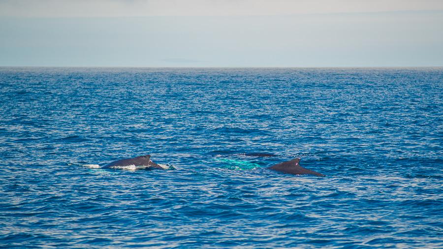 Исландия день шестой. Три кита