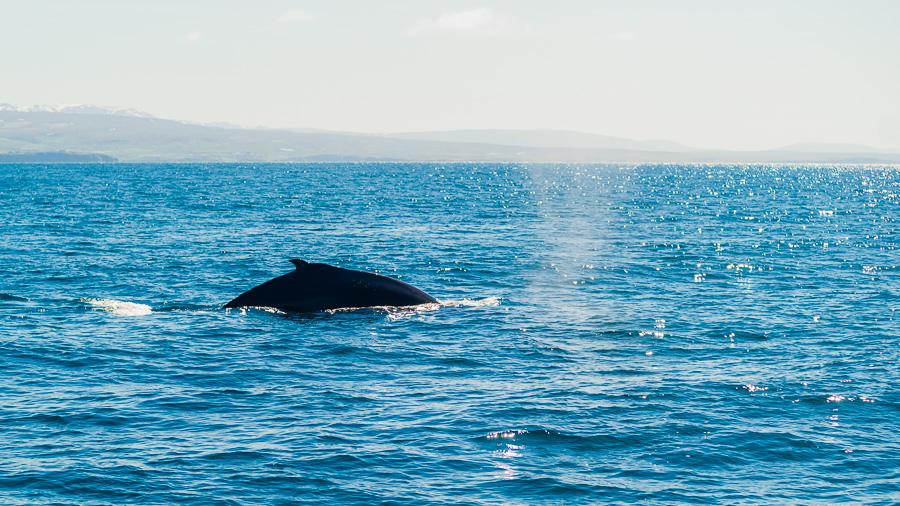 Исландия день шестой. Спина кита