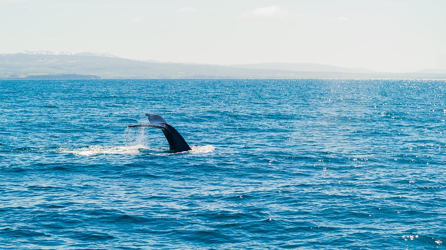 Исландия день шестой. Хвост кита