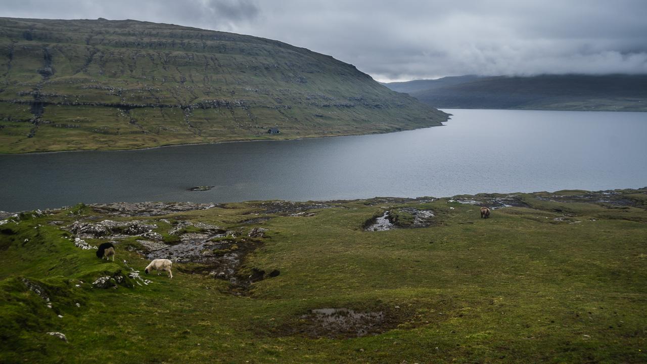 Фареры, день 1 0928|Овцы, холмы и озеро