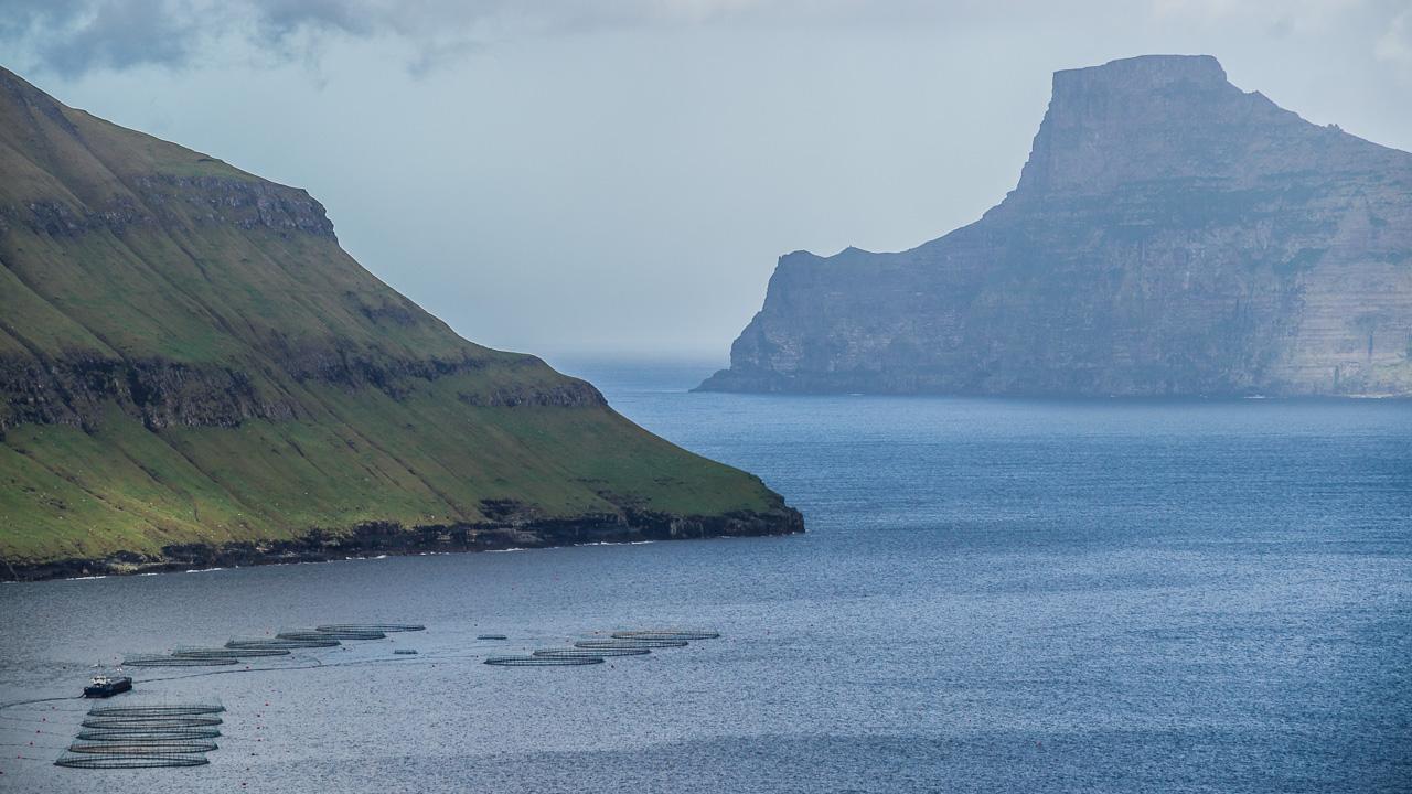 Фареры, день 2 1115|Плантации лосося во фьорде