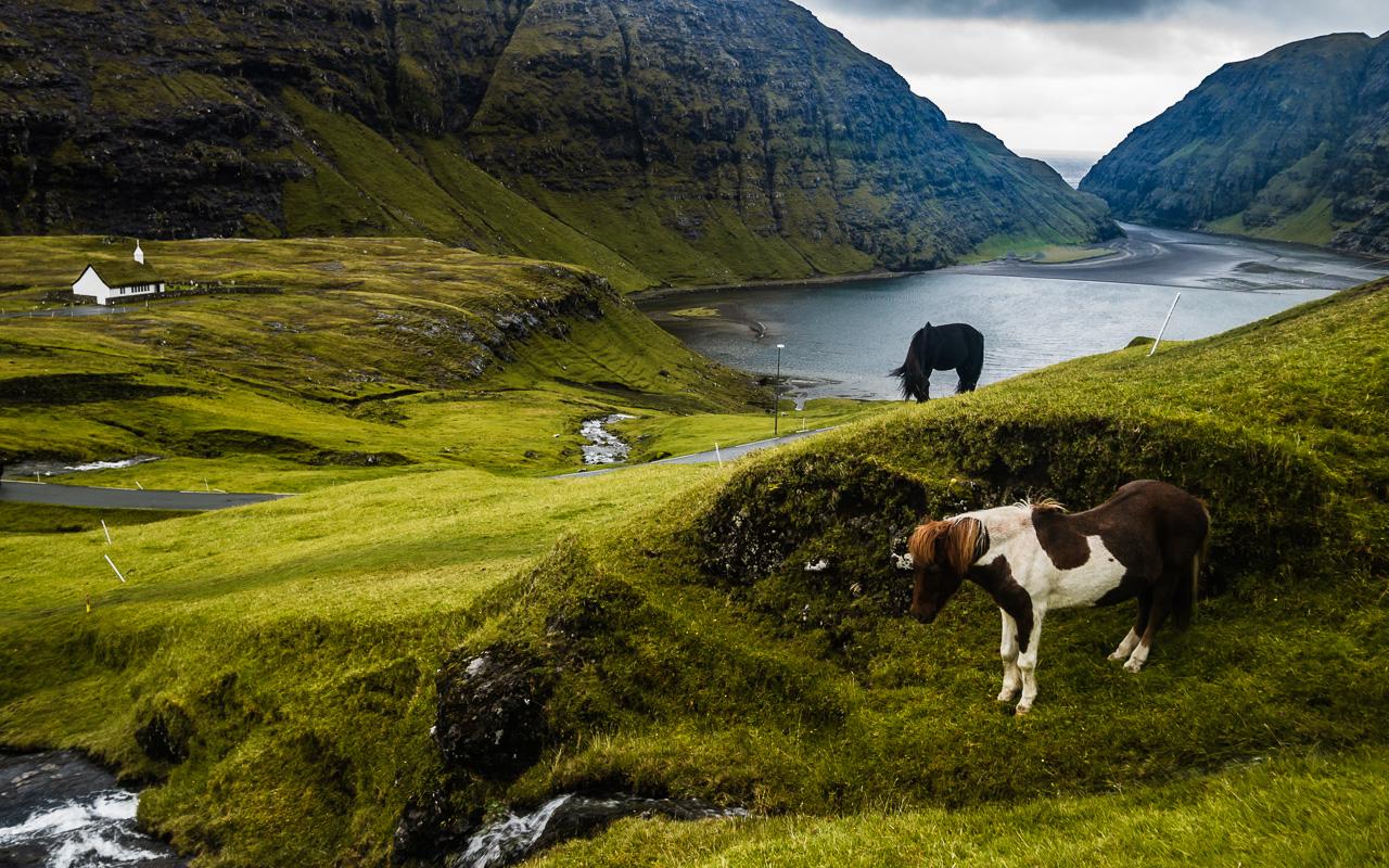 Фареры, день 3 1209|Пейзаж с лошадками