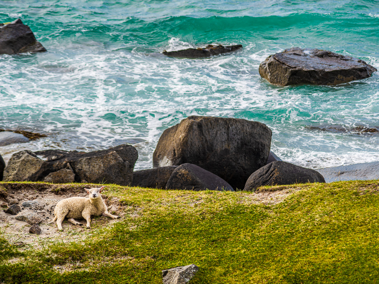 Лофотены, Офферсойкаммен и пляжи 3931|Аборигены на пляже Уттаклейв